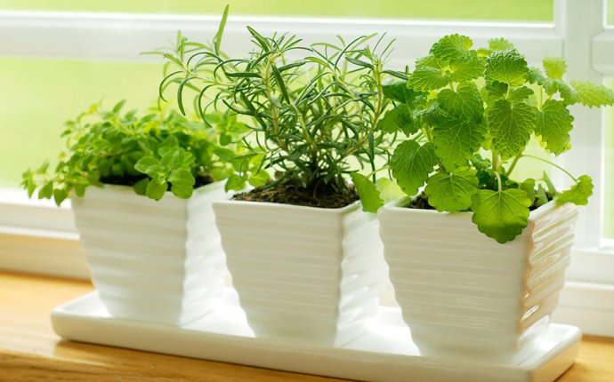 7 Simple Steps to Growing Your Own Windowsill Herb Garden
