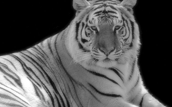 Feng Shui 8 Mansions: Feng Shui Celestial Creatures-White Tiger