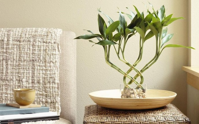 How to Use Feng Shui With Houseplants
