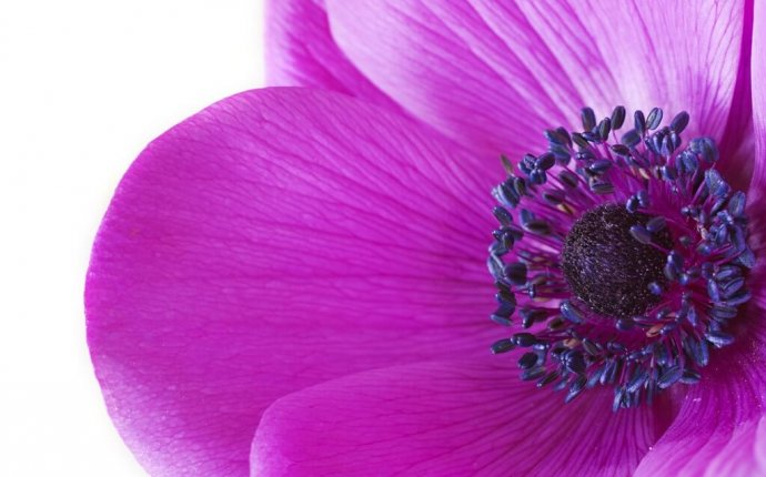 PURPLE POWER – 8 Ways The Color Purple Can Help You Bring More